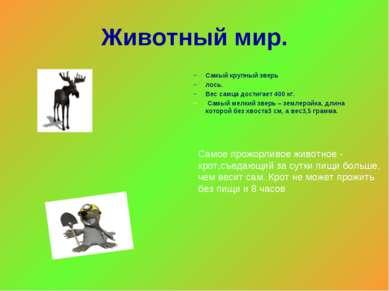 Животный мир. Самый крупный зверь лось. Вес самца достигает 400 кг. Самый мел...