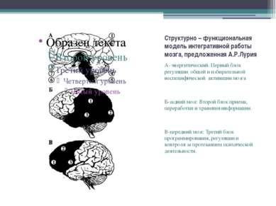 Структурно – функциональная модель интегративной работы мозга, предложенная А...
