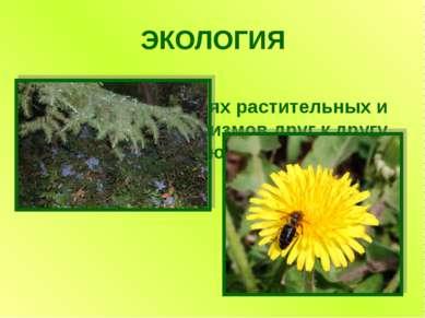 ЭКОЛОГИЯ Наука об отношениях растительных и животных организмов друг к другу ...