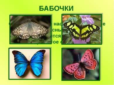 БАБОЧКИ Самые красивые насекомые. Хрупкие и прекрасные создания, превращаются...