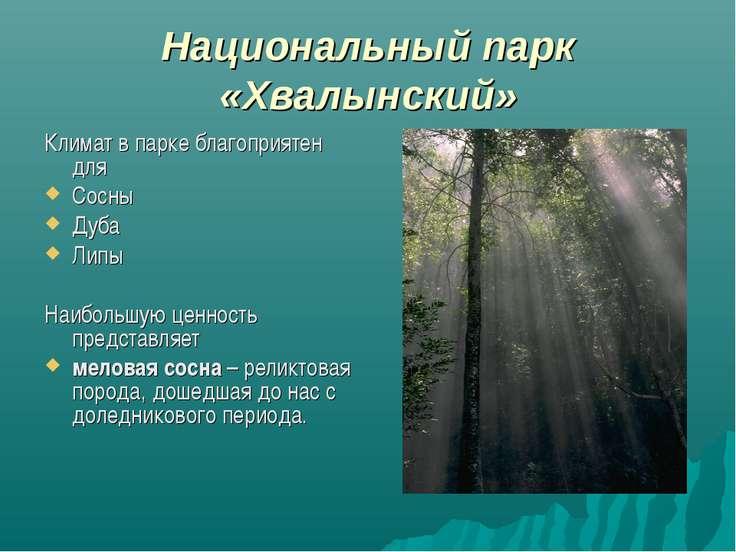 Национальный парк «Хвалынский» Климат в парке благоприятен для Сосны Дуба Лип...