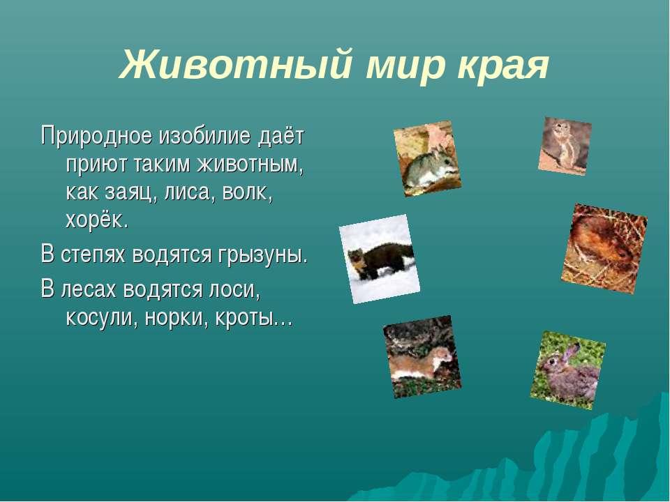 Животный мир края Природное изобилие даёт приют таким животным, как заяц, лис...