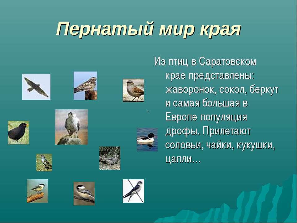 Пернатый мир края Из птиц в Саратовском крае представлены: жаворонок, сокол, ...