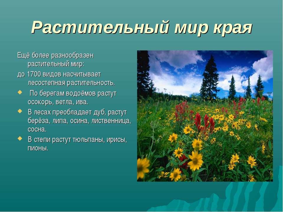 Растительный мир края Ещё более разнообразен растительный мир: до 1700 видов ...