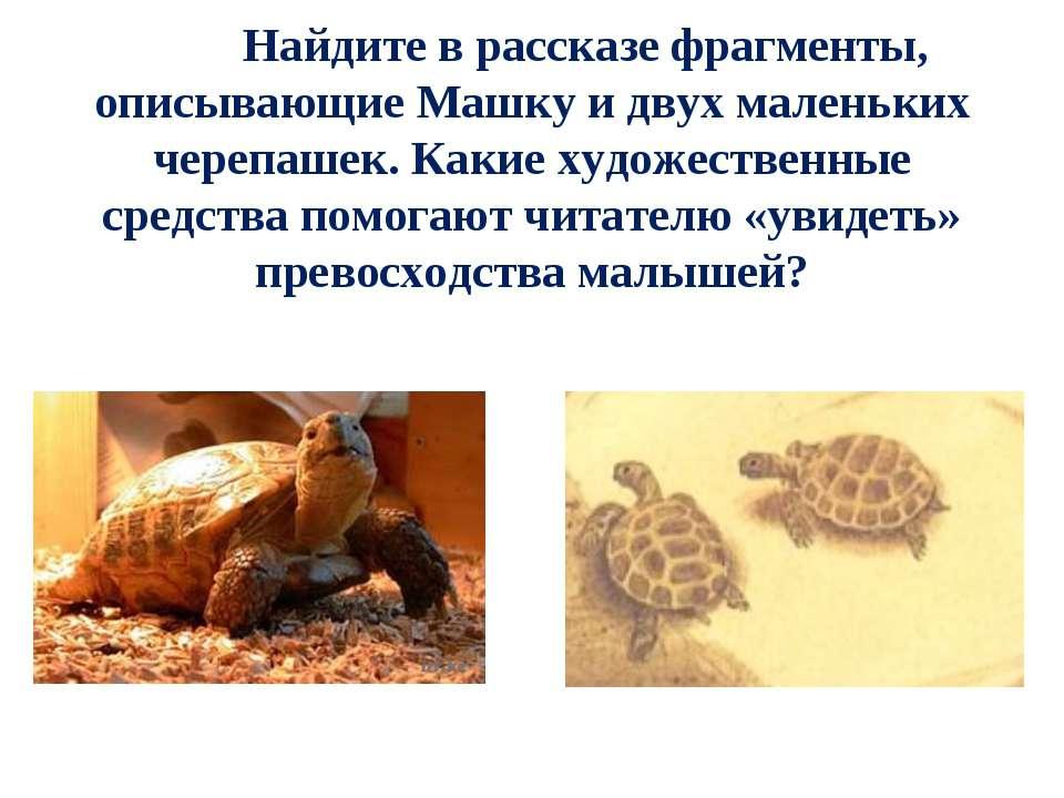 Найдите в рассказе фрагменты, описывающие Машку и двух маленьких черепашек. К...