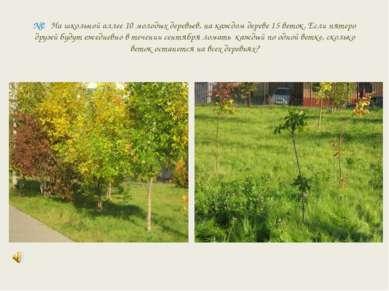 №2 На школьной аллее 10 молодых деревьев, на каждом дереве 15 веток. Если пят...