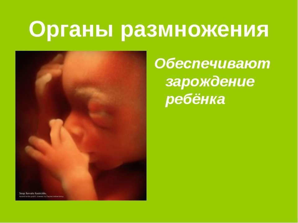 Органы размножения Обеспечивают зарождение ребёнка