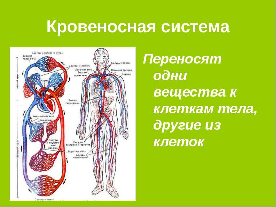 Кровеносная система Переносят одни вещества к клеткам тела, другие из клеток