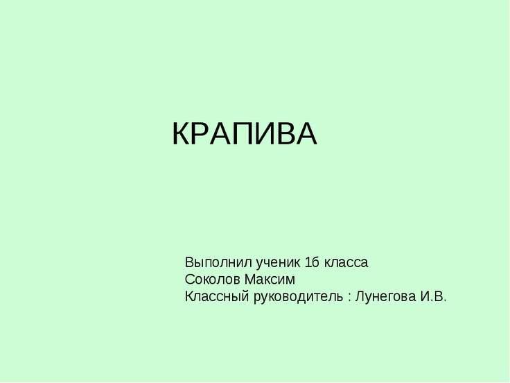 КРАПИВА Выполнил ученик 1б класса Соколов Максим Классный руководитель : Луне...