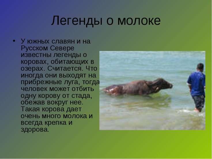 Легенды о молоке У южных славян и на Русском Севере известны легенды о корова...