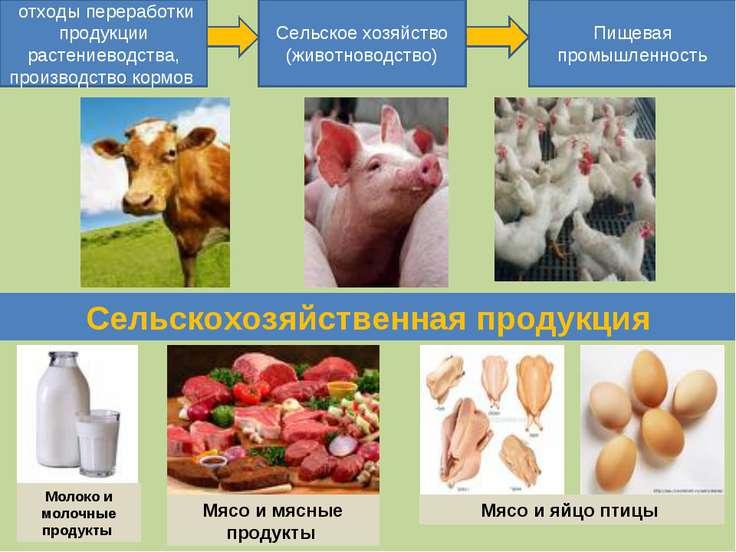 отходы переработки продукции растениеводства, производство кормов Сельское хо...