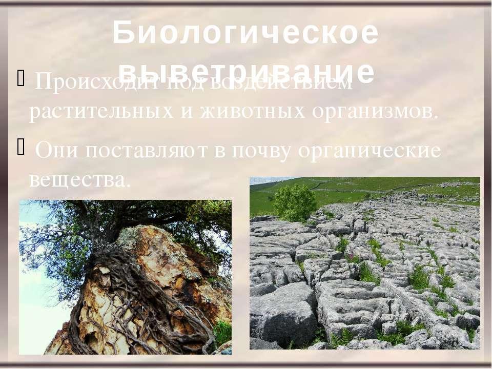 Биологическое выветривание Происходит под воздействием растительных и животны...