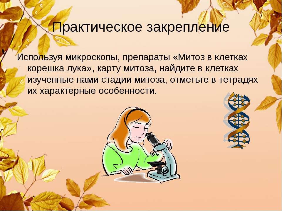 Практическое закрепление Используя микроскопы, препараты «Митоз в клетках кор...