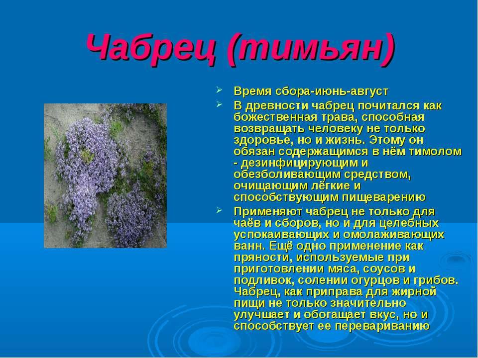 Чабрец (тимьян) Время сбора-июнь-август В древности чабрец почитался как боже...