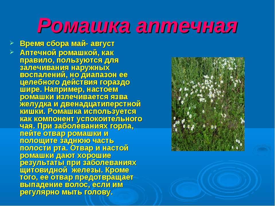 Ромашка аптечная Время сбора май- август Аптечной ромашкой, как правило, поль...