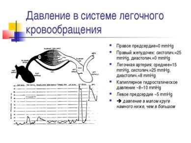 Давление в системе легочного кровообращения Правое предсердие=0 mmHg Правый ж...