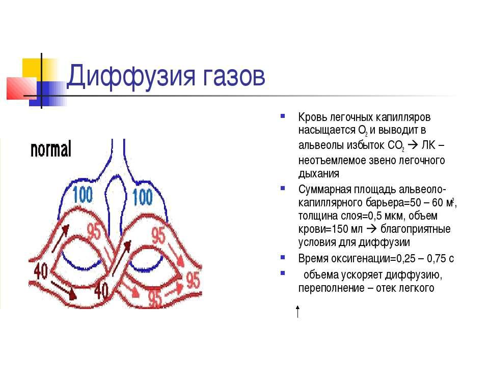 Диффузия газов Кровь легочных капилляров насыщается О2 и выводит в альвеолы и...