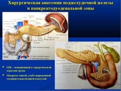 Хирургическая анатомия поджелудочной железы и панкреатодуоденальной зоны ПЖ –...