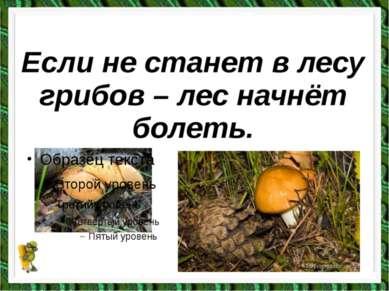 Если не станет в лесу грибов – лес начнёт болеть.