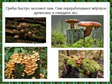 Грибы быстро заселяют пни. Они перерабатывают мёртвую древесину и очищают лес.