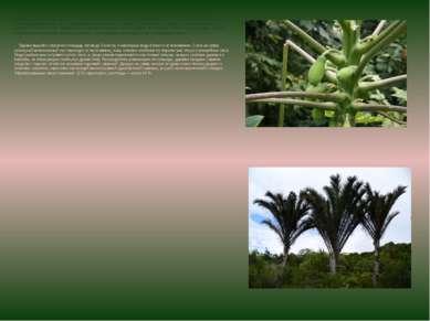Южные области покрыты обширными вечнозелеными влажными высокоствольными экват...