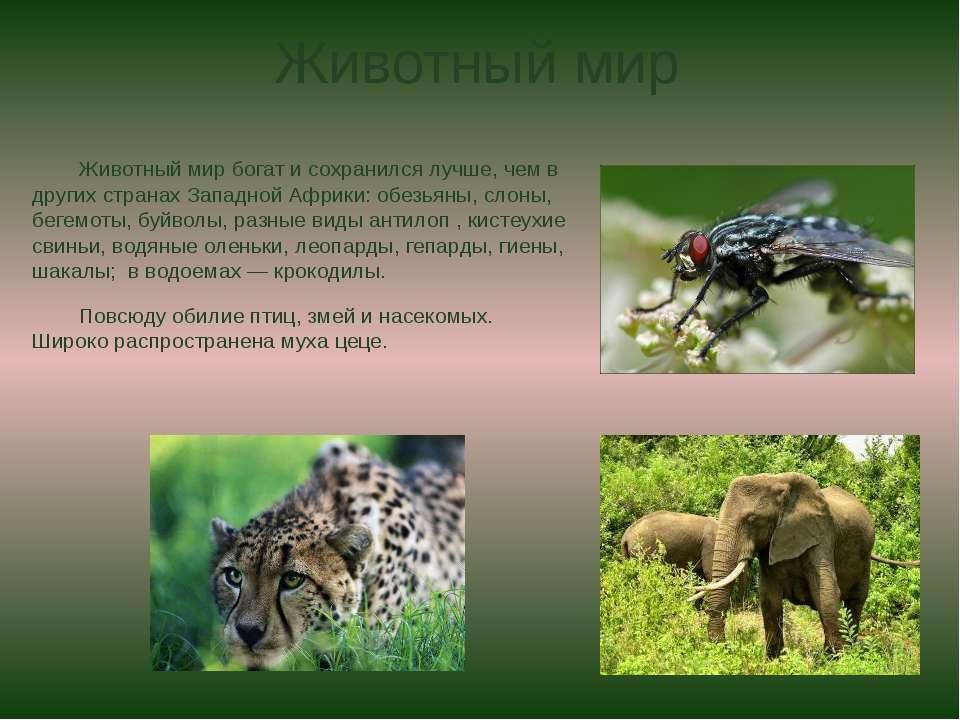 Животный мир Животный мир богат и сохранился лучше, чем в других странах Запа...