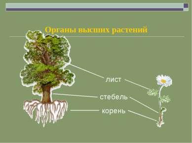 Органы высших растений
