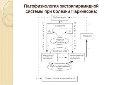 Патофизиология экстрапирамидной системы при болезни Паркинсона: