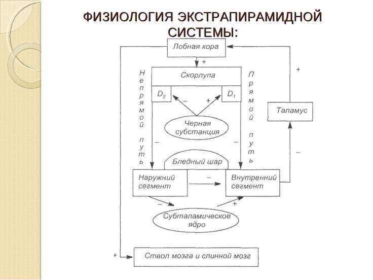 ФИЗИОЛОГИЯ ЭКСТРАПИРАМИДНОЙ СИСТЕМЫ: