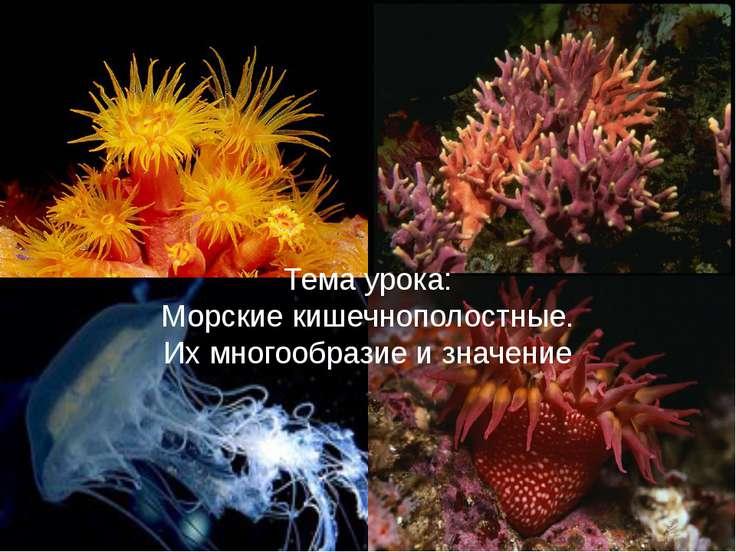 Урок презентация по теме морские кишечнополостные по биологии 7 класс пономарёва
