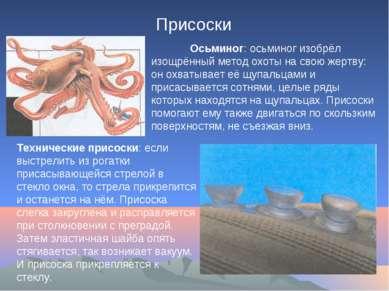 Присоски Осьминог: осьминог изобрёл изощрённый метод охоты на свою жертву: он...