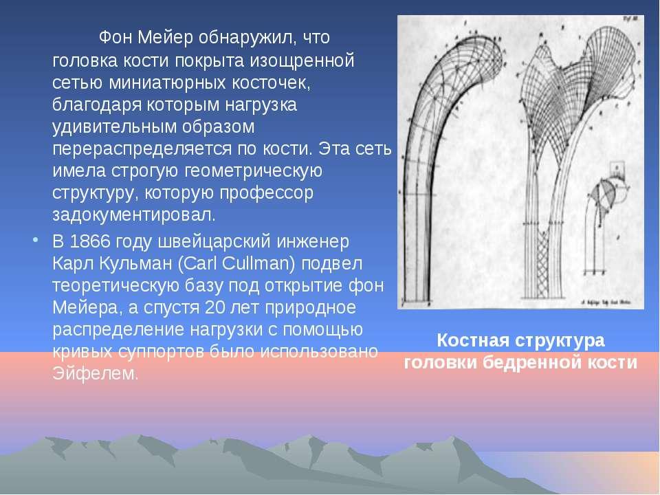 Фон Мейер обнаружил, что головка кости покрыта изощренной сетью миниатюрных к...
