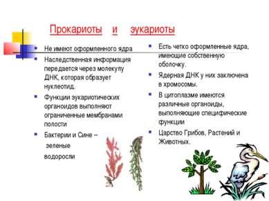 Прокариоты и эукариоты Не имеют оформленного ядра Наследственная информация п...