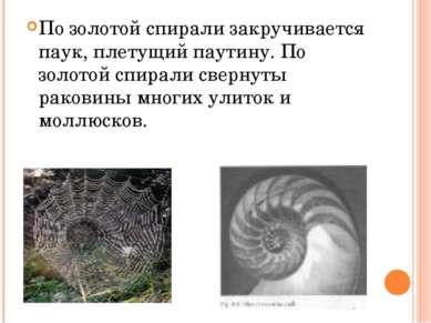 По золотой спирали закручивается паук, плетущий паутину. По золотой спирали с...