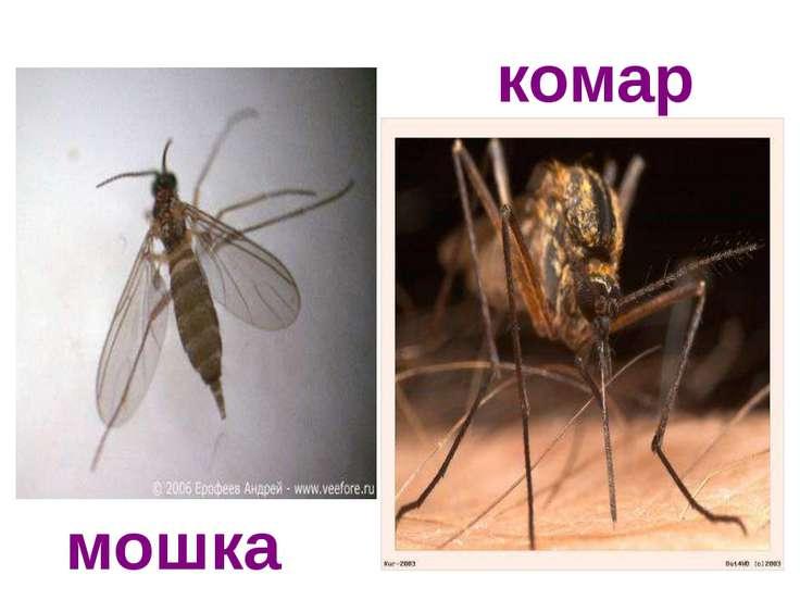 комар мошка