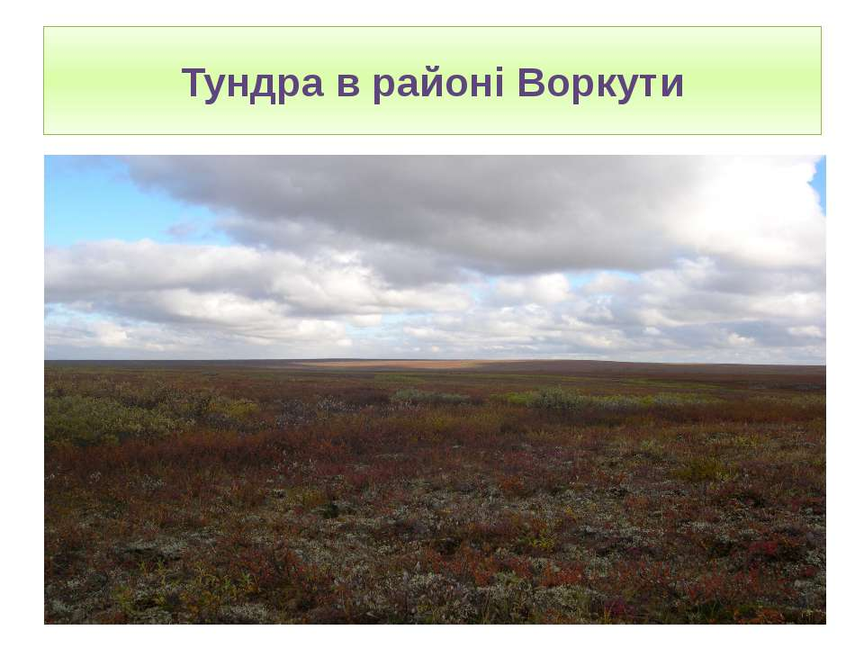 Тундра в районі Воркути