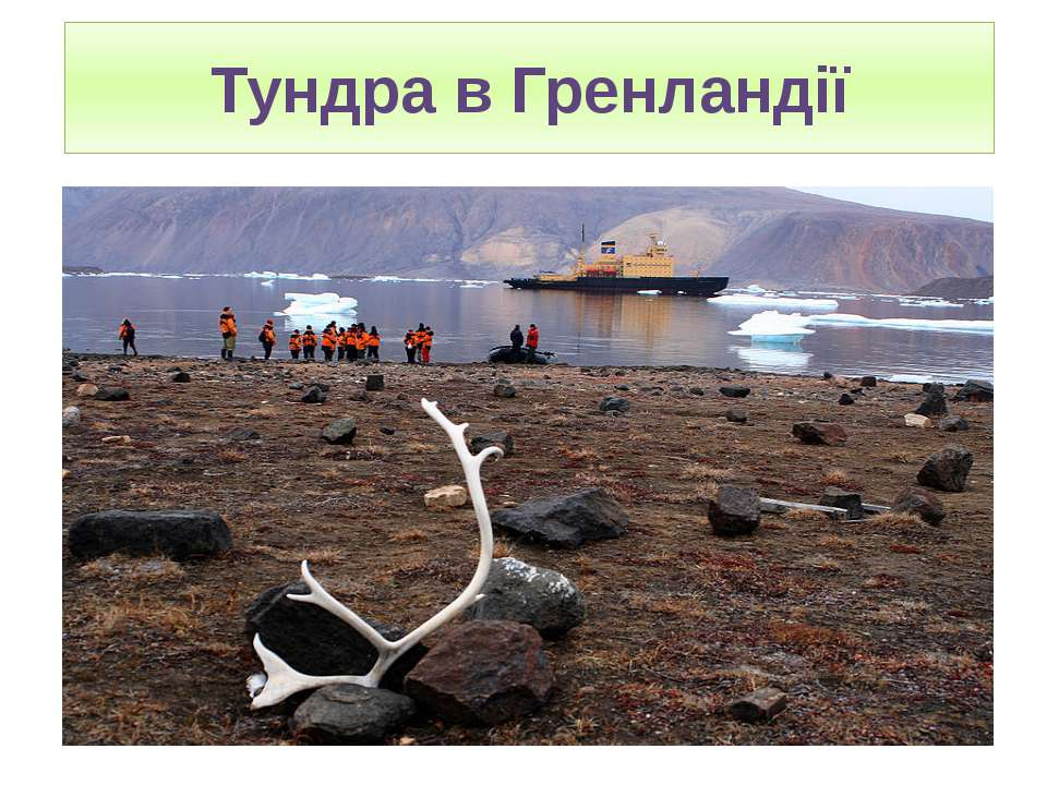 Тундра в Гренландії