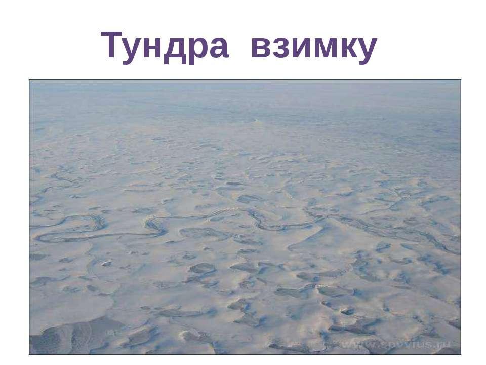 Тундра взимку