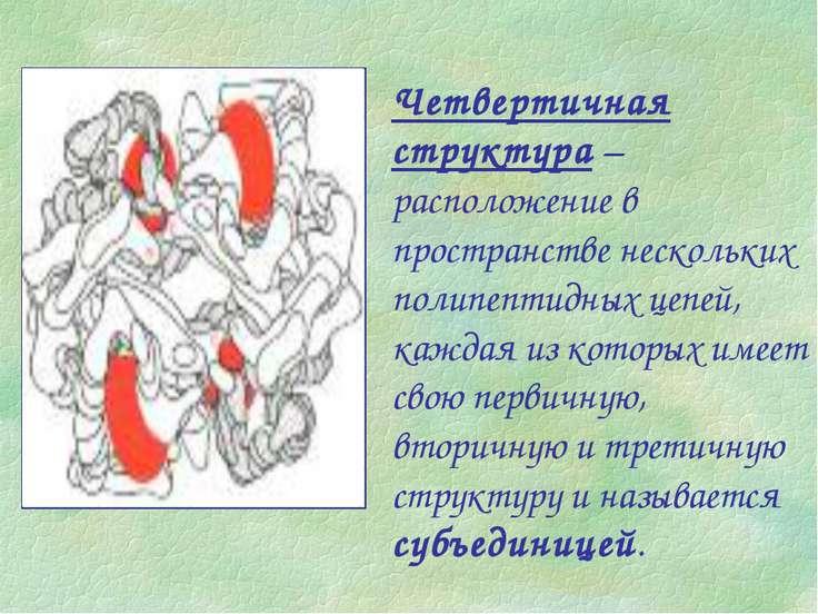 Четвертичная структура – расположение в пространстве нескольких полипептидных...