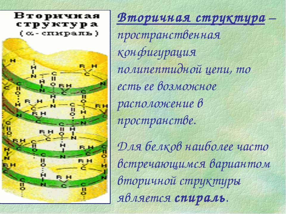 Вторичная структура – пространственная конфигурация полипептидной цепи, то ес...