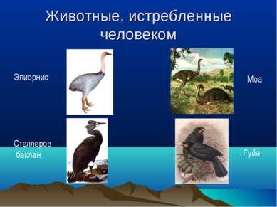 Животные, истребленные человеком Эпиорнис Стеллеров баклан Моа Гуйя
