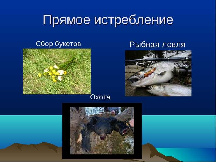 Прямое истребление Сбор букетов Охота Рыбная ловля