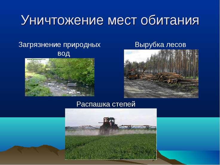 Уничтожение мест обитания Загрязнение природных вод Вырубка лесов Распашка ст...