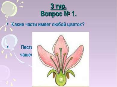 3 тур. Вопрос № 1. Какие части имеет любой цветок? Пестик, тычинка, лепесток,...