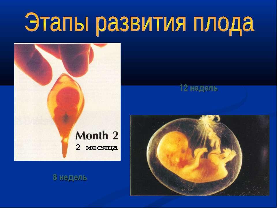 12 недель 8 недель