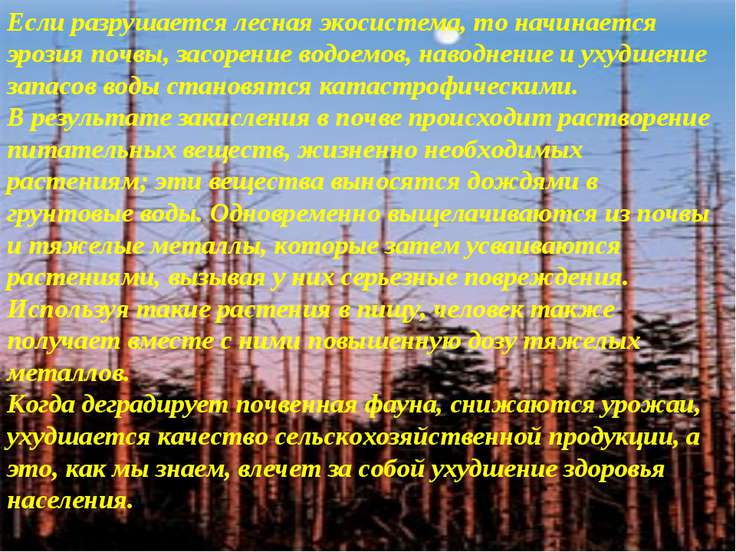 Если разрушается лесная экосистема, то начинается эрозия почвы, засорение вод...