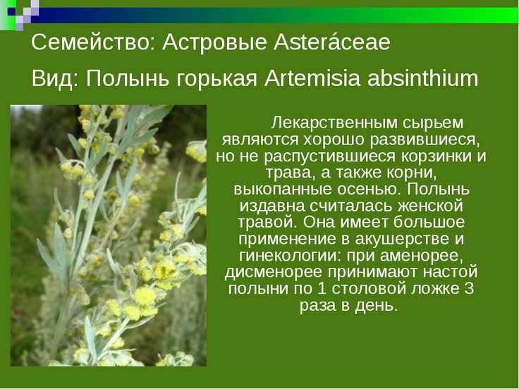 Семейство: Астровые Asteráceae Вид: Полынь горькая Artemisia absinthium Лекар...