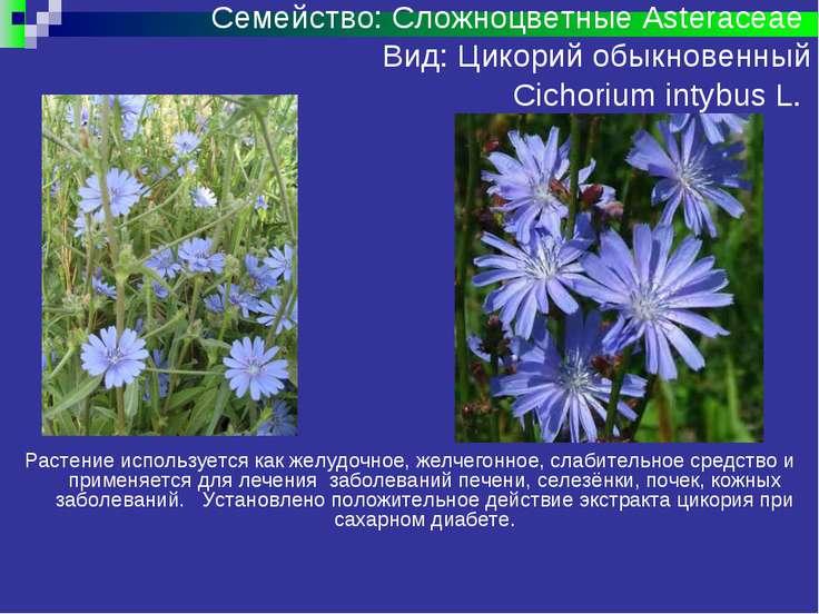 семейство сложноцветные хорошо знакомые растения