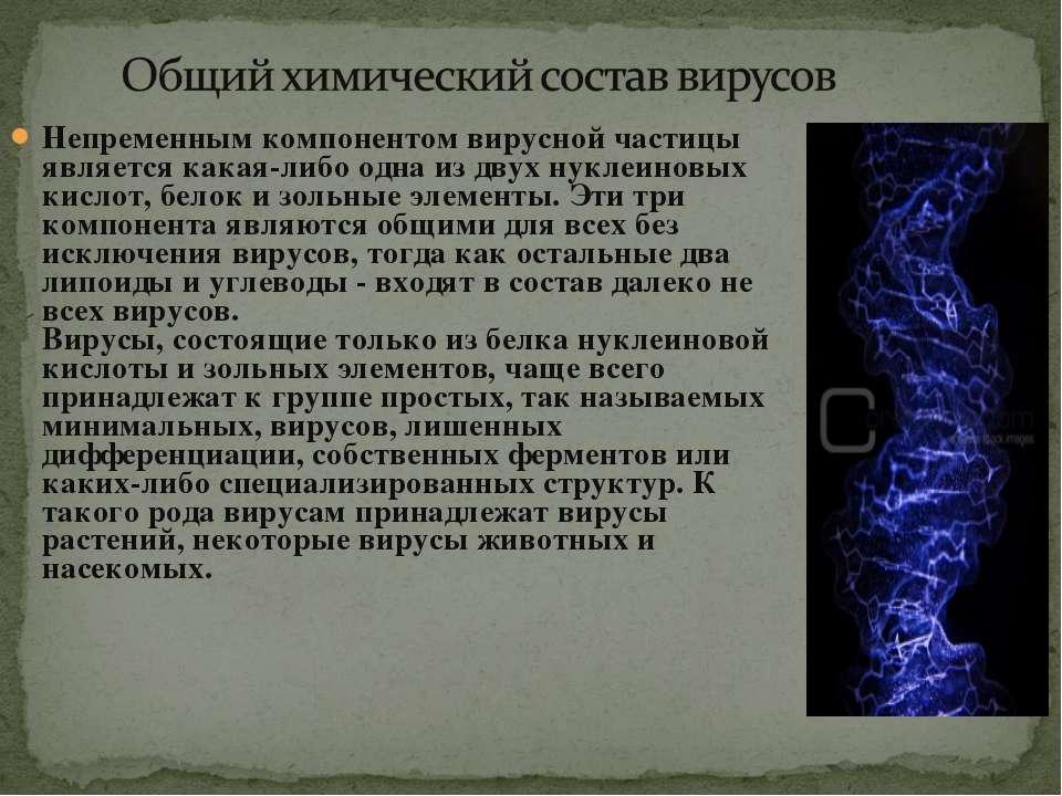 Непременным компонентом вирусной частицы является какая-либо одна из двух нук...