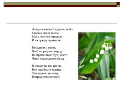 Ландыш нежный и душистый - Символ мая и весны. Мы в лесу его открыли И на гря...